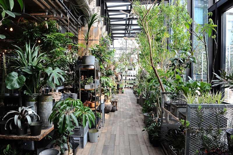 """""""生き物""""と暮らす毎日を。観葉植物が豊富にそろう「garage NAGOYA」 アイキャッチ画像"""